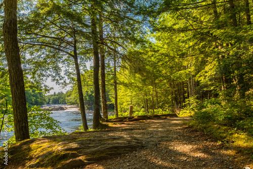 Papiers peints Route dans la forêt Forest Trail