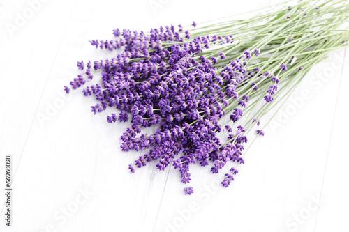 Foto auf AluDibond Lavendel lavande