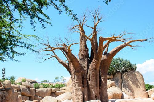 Fotografía  baobab