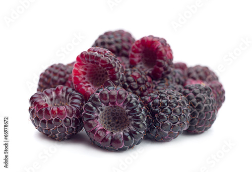 Black raspberry Cumberland
