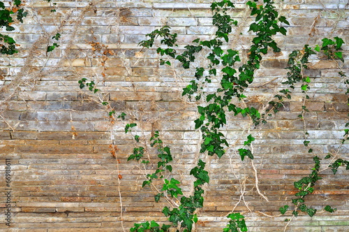 kamienna-sciana-obrosnieta-zielona-roslina