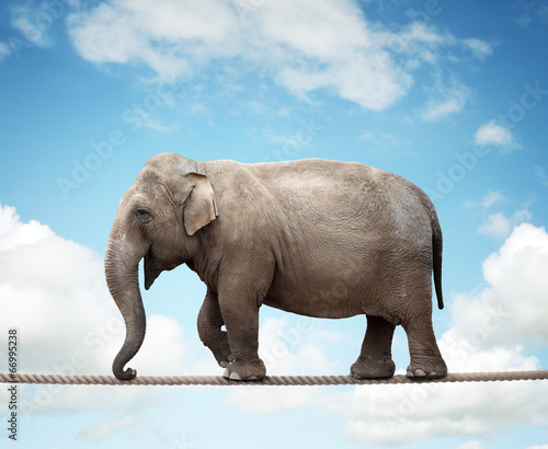 Fotobehang Olifant Elephant on tightrope