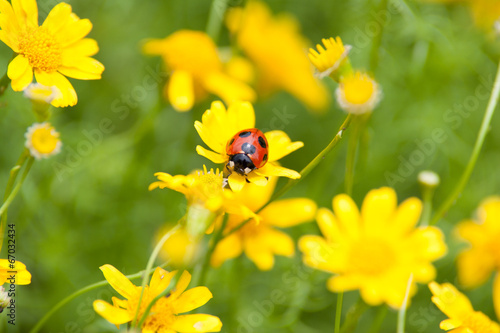 Photo  Ladybug on a yellow flower