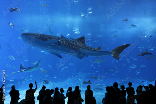 Fotografie, Obraz  aquarium window in Okinawa, Japan