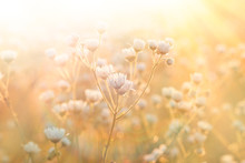 Meadow Flowers - Daisy Illuminated By Sunlight