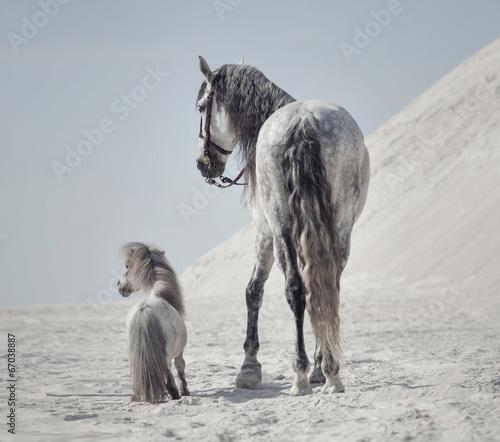 Obraz Świetne ujęcie dwóch koni - fototapety do salonu