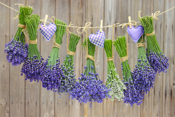 Fototapeta Prowansalski lavendel