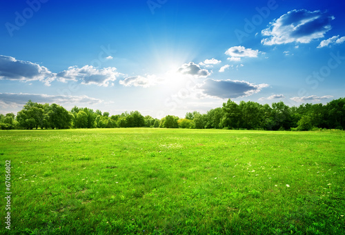 Fotobehang Landschap Green grass and trees