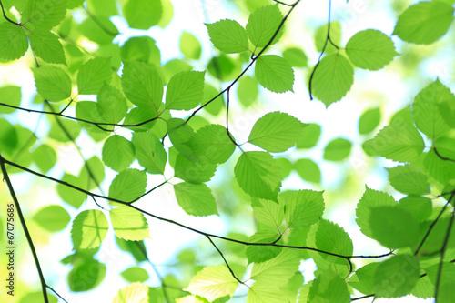 Fotobehang Zwavel geel 新緑の木々