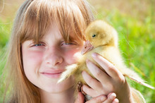 Happy Little Girl With Gosling