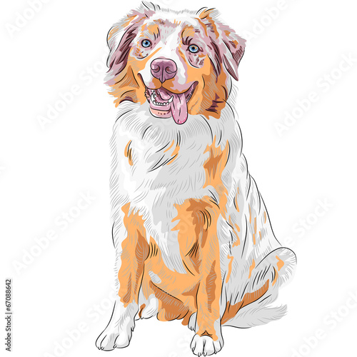 Photo vector dog Red Australian Shepherd breed