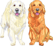 Vector Sketch Two Dog Breed Go...