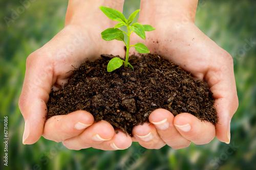 Valokuva  Female hands holding young plant