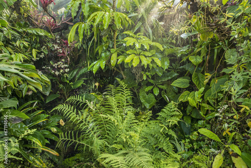 Photo  green tropical background rainforest