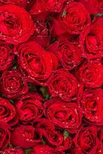 Beautiful Red Roses With Rain Drops