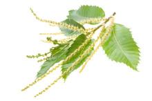 Chestnuts Branch