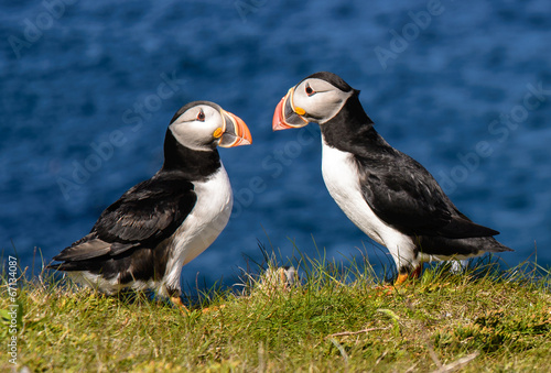 Atlantic puffins Tablou Canvas