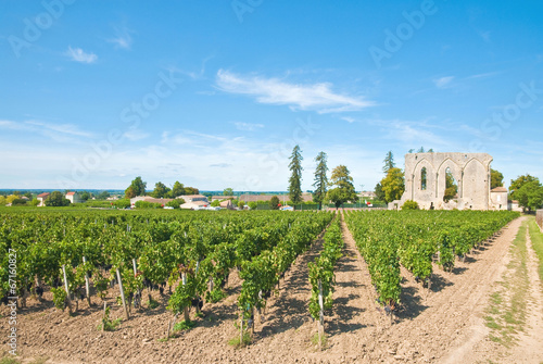 Photo Vineyard of Saint-Emilion, France