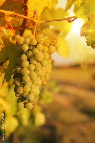 Fotobehang Wijngaard sunset in vineyards