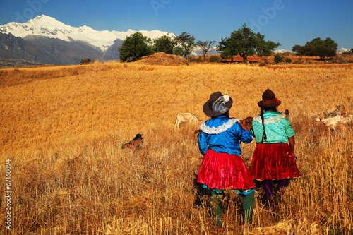 Photo Stands South America Country Harvesting in Cordiliera Negra, Peru, South America