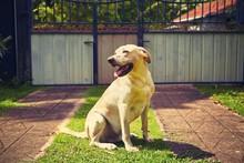 Dog On The Garden