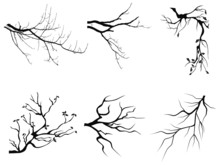 Branch Silhouette Shapes