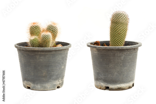 Papiers peints Cactus Cactus in flowerpot isolated on white background