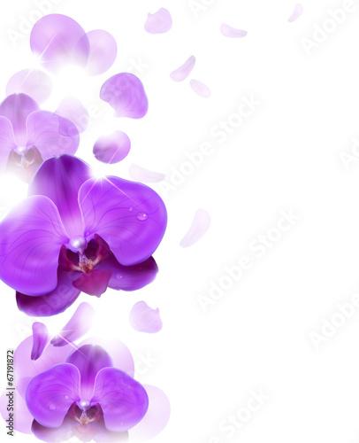 Spoed Foto op Canvas Iris purple orchid