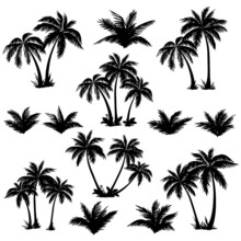 Tropical Palm Trees Set Silhouettes
