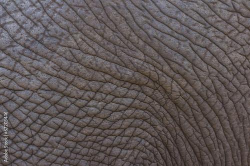 Photo  Detailed elephant skin texture