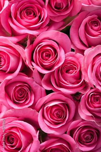 piekne-rozowe-kwiaty-rozy-tlo