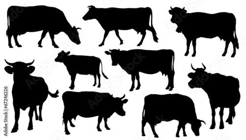 Canvas Print cow silhouettes