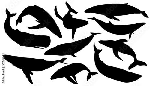 Fototapeta premium sylwetki wielorybów