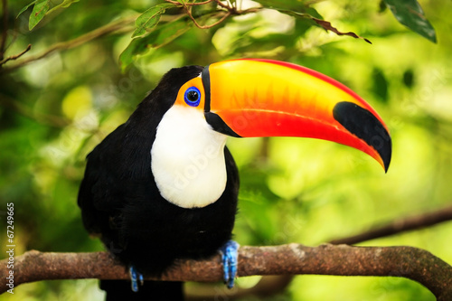 Colorful tucan in the aviary #67249665