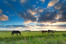 Horses Grazing On Pasture At S...