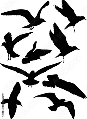 set of eight gull black silhouettes Wall mural