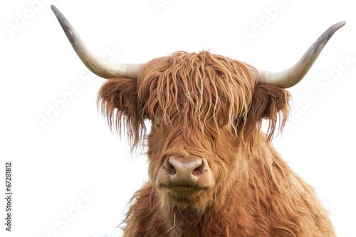 Photo sur Toile Vache de Montagne Highland Cattle Porträt