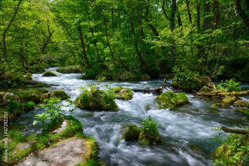 Fototapeten Forest river Oirase gorge in fresh green, Aomori, Japan