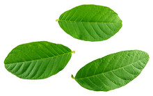 Leaves Guava Set Close Up Macr...