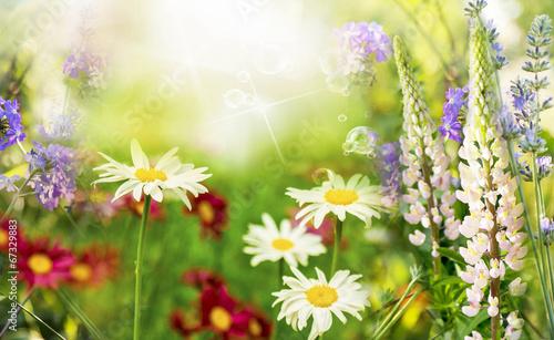Dzikie piękne kwiaty. Letnia łąka