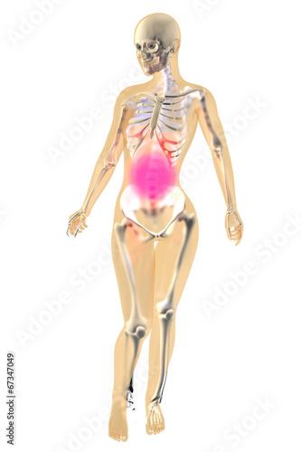 Weibliche Anatomie - Bauchschmerzen - Buy this stock illustration ...