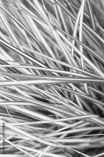 Foto-Kuscheldecke premium - Natural background with garden plant (von JulietPhotography)