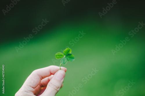 Valokuva  Lucky Four Leaf Clover