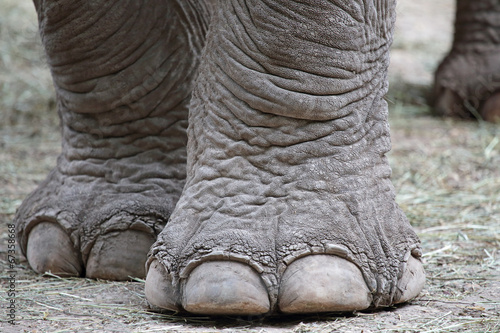 Photo sur Toile Elephant Closeup of elephant feet