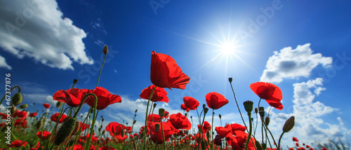 Cadres-photo bureau Poppy Field of wild red poppies on a sunny summer day