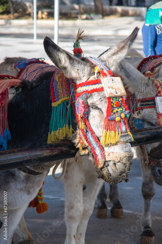 Fotografía donkey