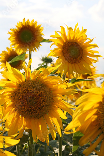 Garden Poster Floral 4137-f14