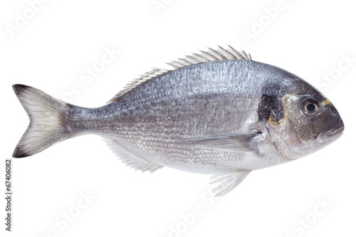 Poster de jardin Poisson Dorado fish on white background