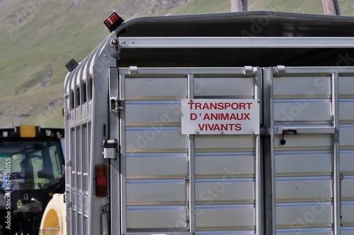 Obraz na plátně transport d'animaux,remorque,tracteur