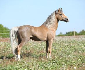 Nice sport pony standing on pasturage